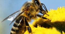 getingstick och insektsbett