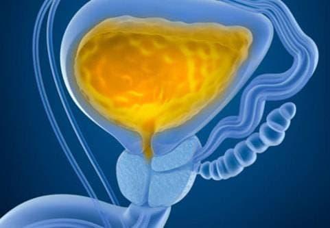 urinvägar urinblåsa