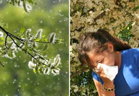 Pollensäsongen är här nu